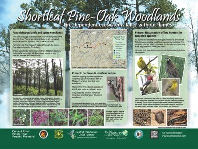 Stop 3: The fire ecology of shortleaf pine-oak woodlands