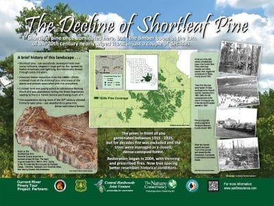 Stop 2: The decline of shortleaf pine